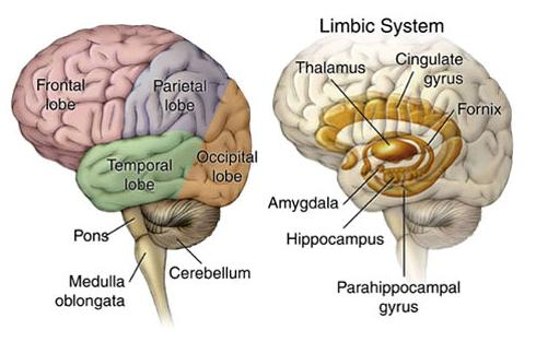 The Central Nervous System Cns Ireland Multiple Sclerosis Me