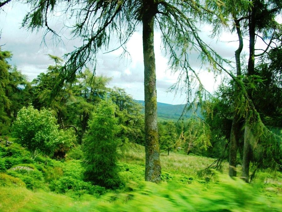 Wicklow Mountains, Ireland 2011