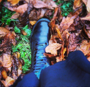 Docs in autumn