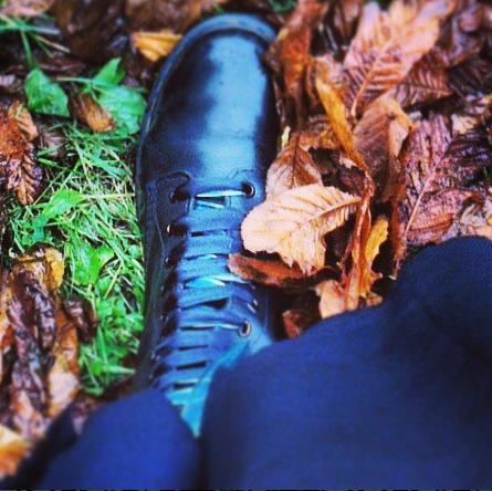 Docs in autumn